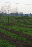 Downsview Park Reforestation and Site Works