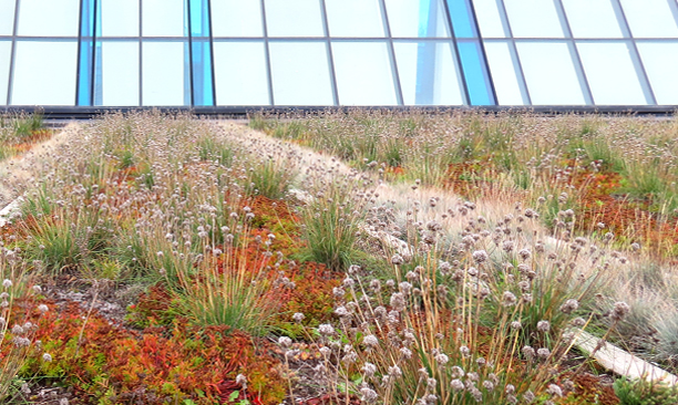 ecological_GreenRoof_RegerntPark3