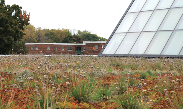 ecological_GreenRoof_RegerntPark4